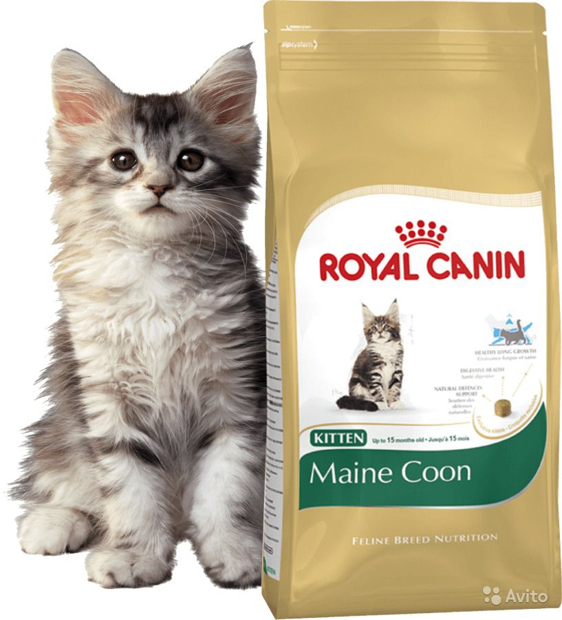 Корм royal canin для кота