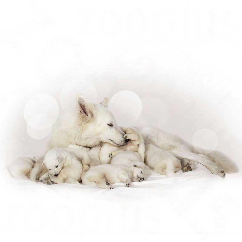 Шампунь от блох для собак: правила использования и